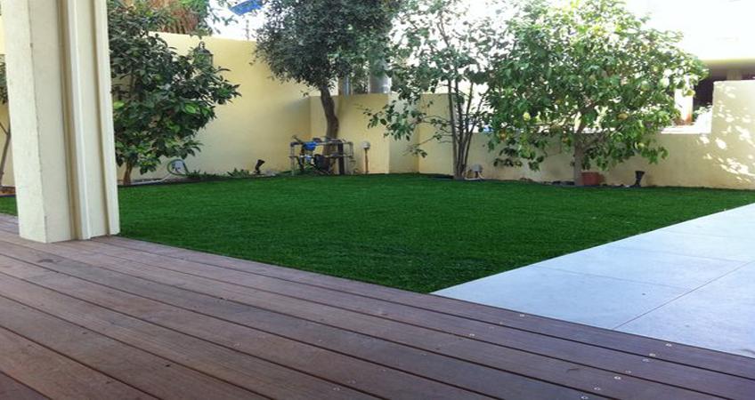 דשא איכותי לגינות