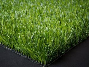 דשא סינטטי פספלום פרו גינות פאר